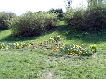 Flower bed on the slope №12932