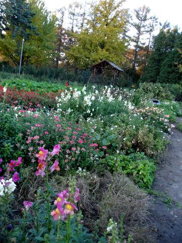 Herbst Blumenbeet №12953