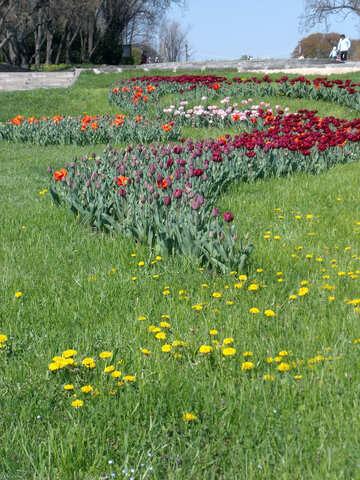Park design №12915