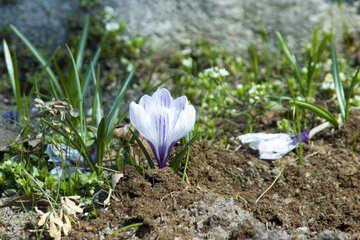 First flower №12811