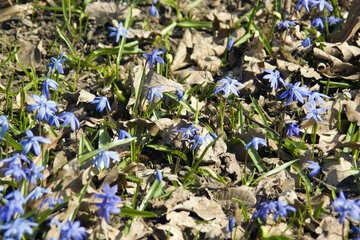 Fiori delicati primavera №12773