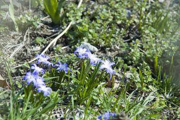 Spring Flowers №12771