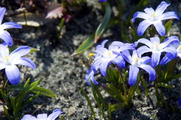 Bright spring flower №12783