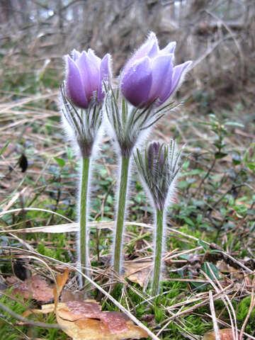 Spring wild flowers №12624