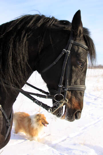 Winter portrait of horse