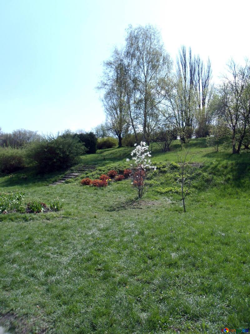 Flowering bush on the slope №12916