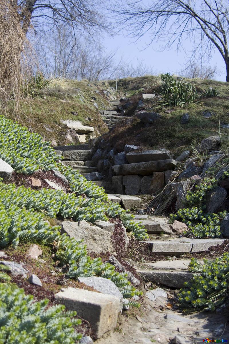 Die Schritte in der Landschaft №12862