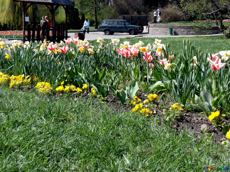 Daffodils and tulips in the city №12937