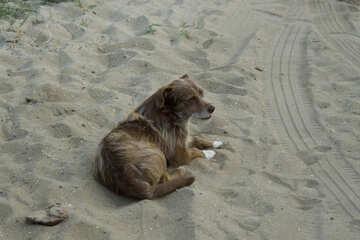 Marine dog №13950