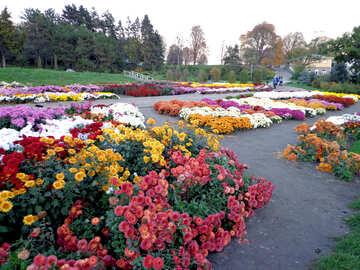 Flower-show №13829