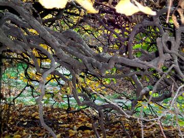 Curves branch №13818