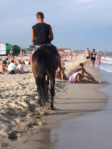 Прокатчик лошадей №13651