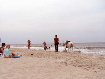 Pony sulla spiaggia №13639