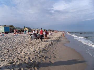 Пони работает на пляже №13562