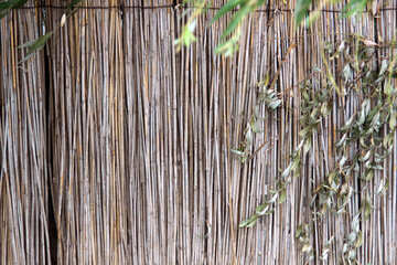 Wall of reeds №13971
