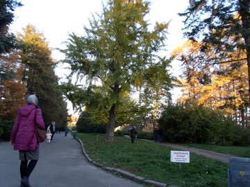 Menschen im Herbst park №13826