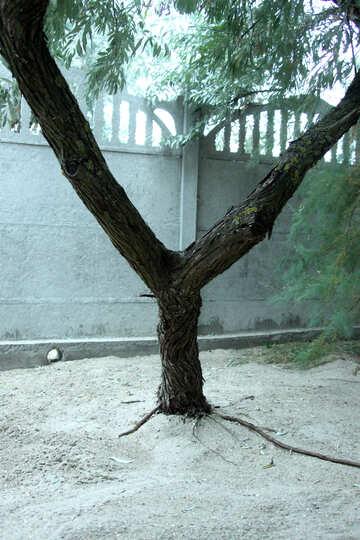 Wood slingshot №13893