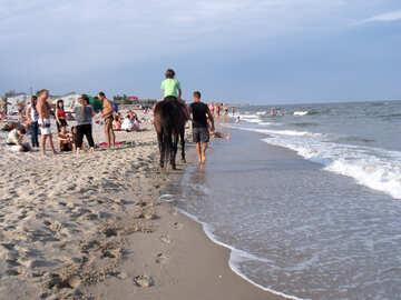 Прогулки на лошадях по пляжу №13498