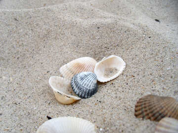 Seashells in the sand №13617