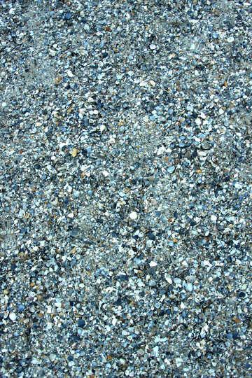 Muscheln im sand №13841
