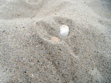 Shells in the sand №13526