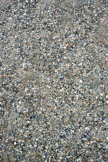 Sand and shells №13870