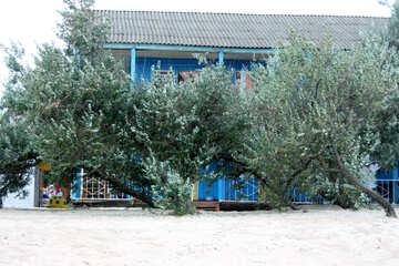 Alberi sul mare №13127