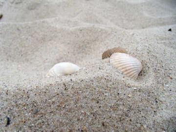 Seashells №13575