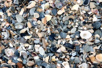 Seashells on the beach №13858