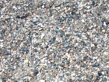 Seashells on the beach №13861