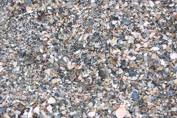 Small seashells on the beach №13865