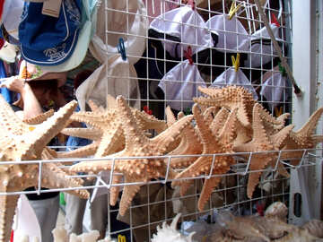 Starfish №13596