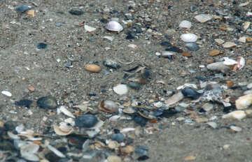 Conchiglie sulla spiaggia №13866
