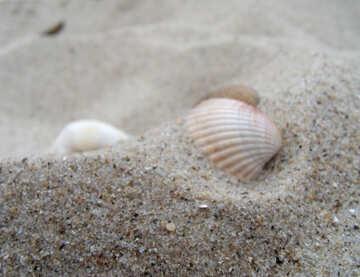 Shell №13592