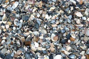 Broken shells №13880