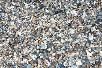 Multicolored broken shells №13850
