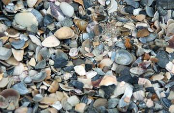 Shells  №13843