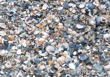 Texture of broken shells №13847