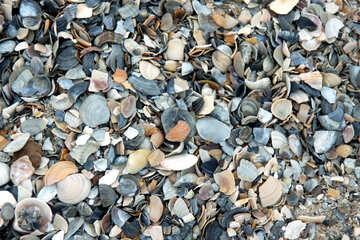 Texture of shells №13848