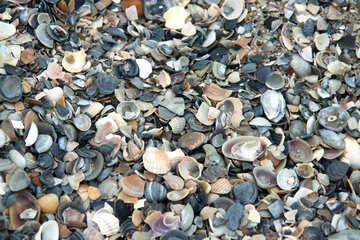 Texture shells №13871