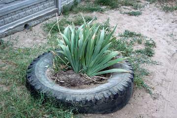 Eine Blume im Bett von Reifen №13686