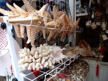 Продажа кораллов и морских звезд №13652