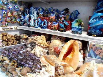 Vendita di souvenir e conchiglie №13634