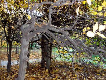 Crooked tree №13833