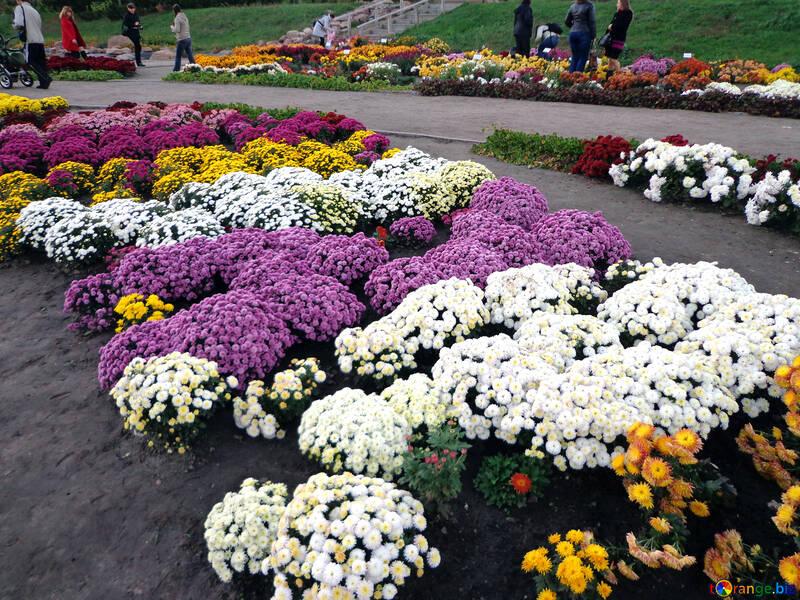 Fiori nel parco №13832