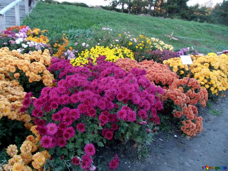 Flowers on the hillside №13817