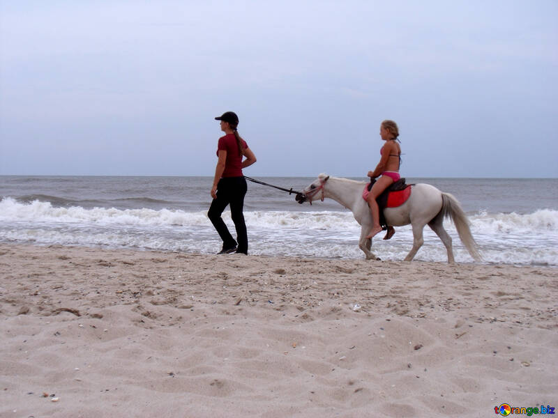 Pony №13566
