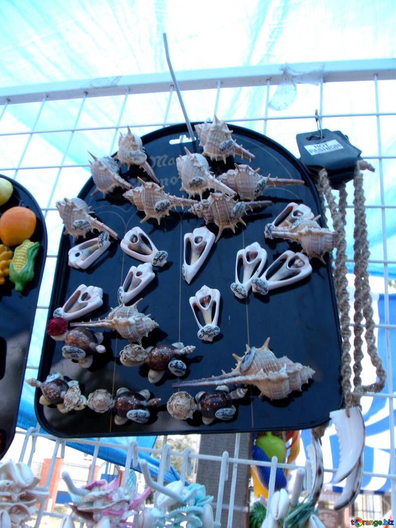 Shells Beauty №13477