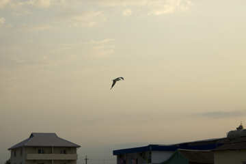 Seagull above the city №14449