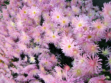 Floral background №14153